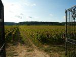 Burgundy – Côte de Nuits and Côte de Beaune