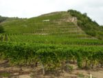 The Northern Rhône – Demystified