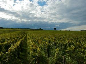 Burgundy's Rolling Hills